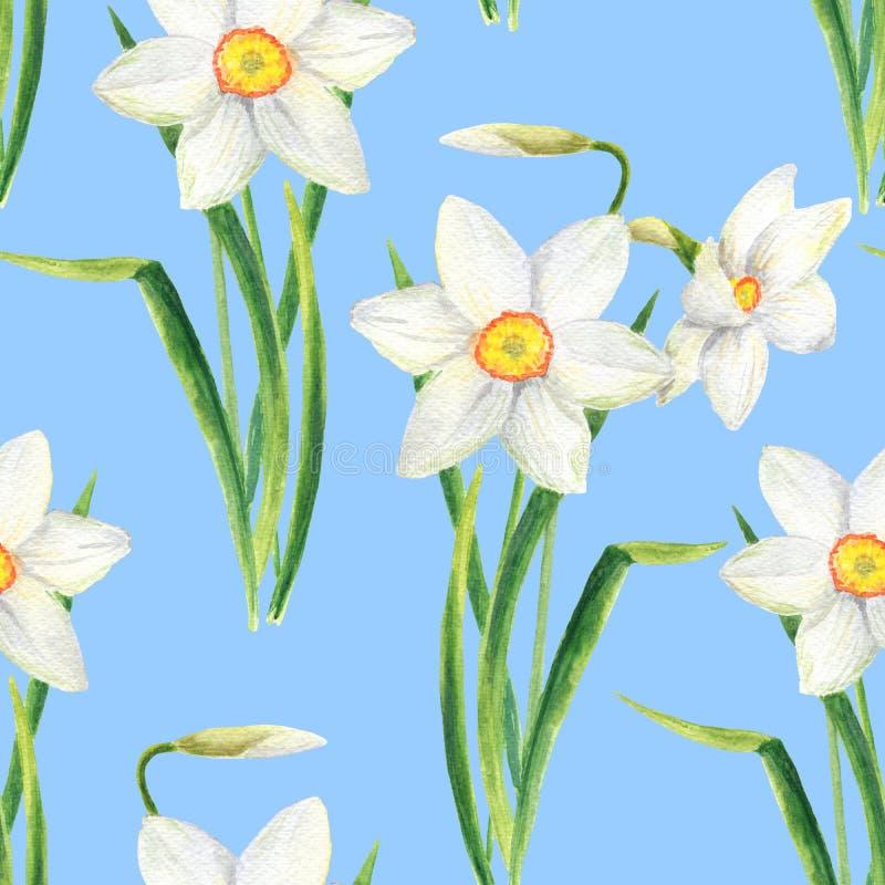 Os narciso da aquarela florescem o teste padrão sem emenda Ilustração tirada mão do ramalhete do narciso amarelo isolada no fundo ilustração royalty free