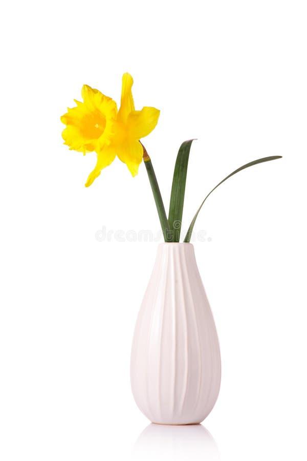 Os narciso florescem em um vaso imagens de stock royalty free