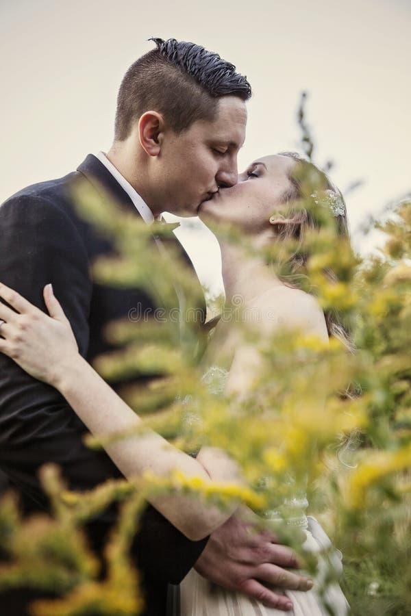 Os noivos beijam primeiramente foto de stock royalty free