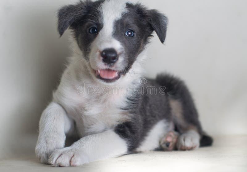 Os olhos azuis do retrato de Adroable perseguem o sorriso e felizes preto e branco fotografia de stock royalty free