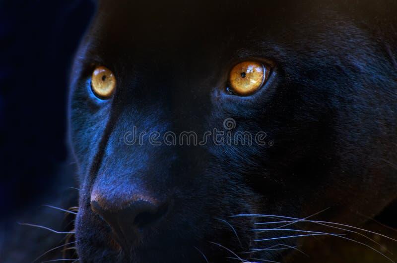 Os olhos de um predador fotos de stock royalty free