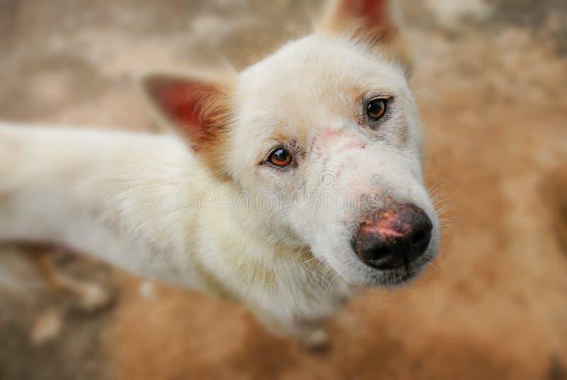 Os olhos do cão completamente das perguntas fotografia de stock royalty free
