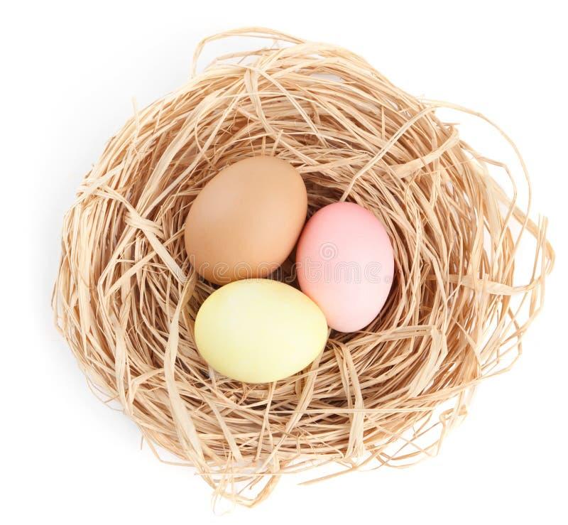 Os ovos da páscoa coloridos estão no ninho fotografia de stock royalty free