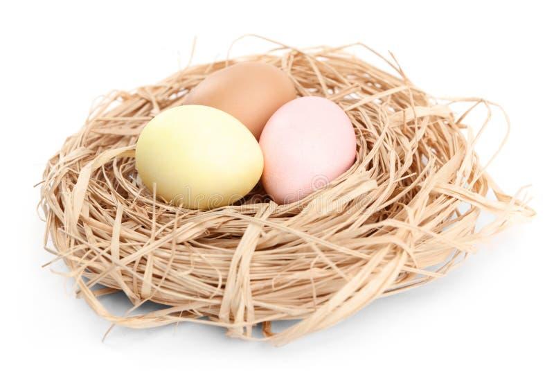 Os ovos da páscoa coloridos estão no ninho imagem de stock royalty free