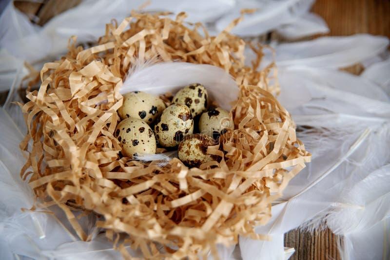 Os ovos da páscoa no pássaro aninham-se no fundo de madeira rústico Mola, Páscoa ou conceito saudável do alimento biológico imagem de stock