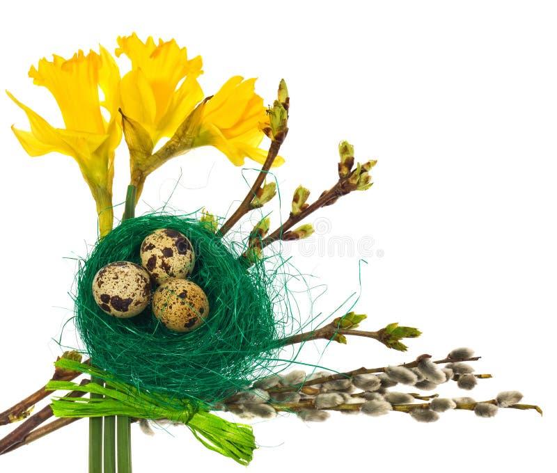 Os ovos da páscoa no pássaro verde aninham-se com narcisos amarelos das flores, amentilhos imagens de stock royalty free