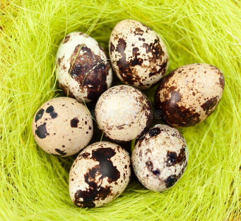 Os ovos de codorniz de Easter estão na fibra do sisal imagem de stock royalty free