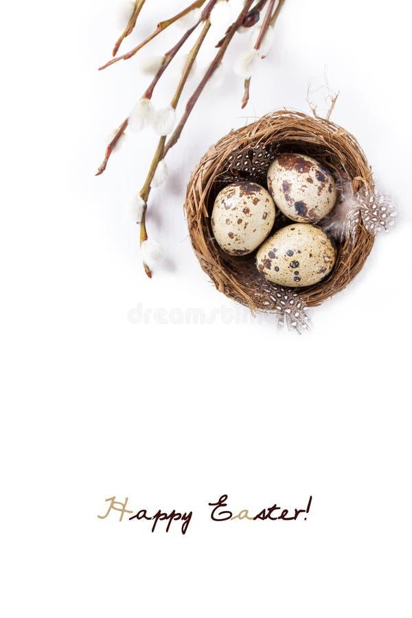 Os ovos de codorniz em um ninho com penas e salgueiro de bichano ramificam em um fundo branco para a Páscoa fotografia de stock