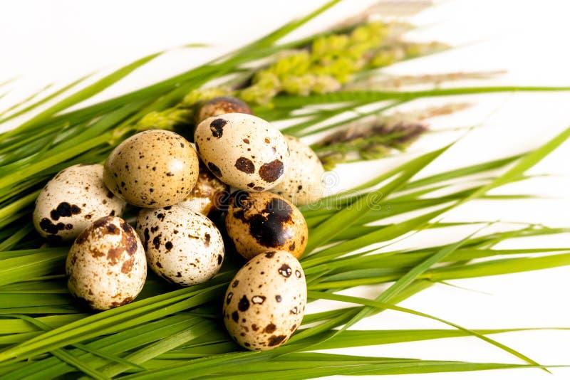 Os ovos de codorniz encontram-se na grama fresca imagem de stock royalty free