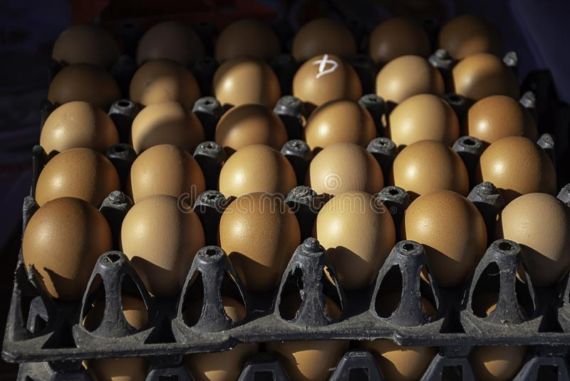Os ovos são colocados os painéis plásticos pretos foto de stock royalty free