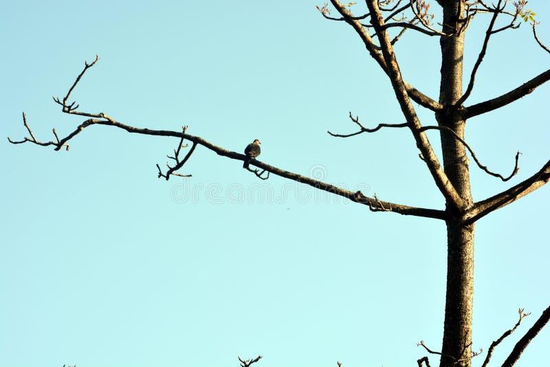 Os pássaros bonitos na árvore fotografia de stock royalty free
