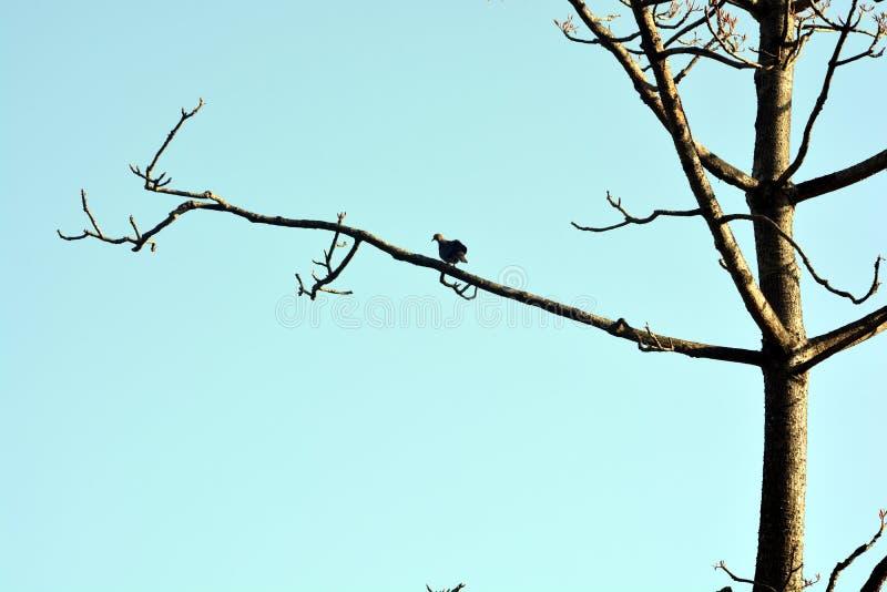 Os pássaros bonitos na árvore fotos de stock
