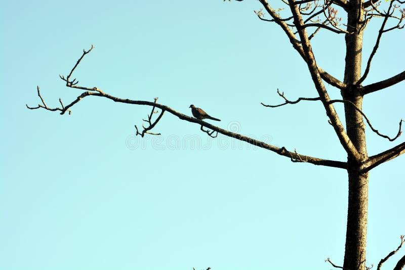 Os pássaros bonitos na árvore imagem de stock royalty free