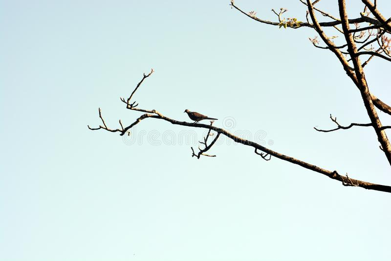 Os pássaros bonitos na árvore fotos de stock royalty free
