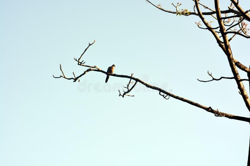 Os pássaros bonitos na árvore imagens de stock