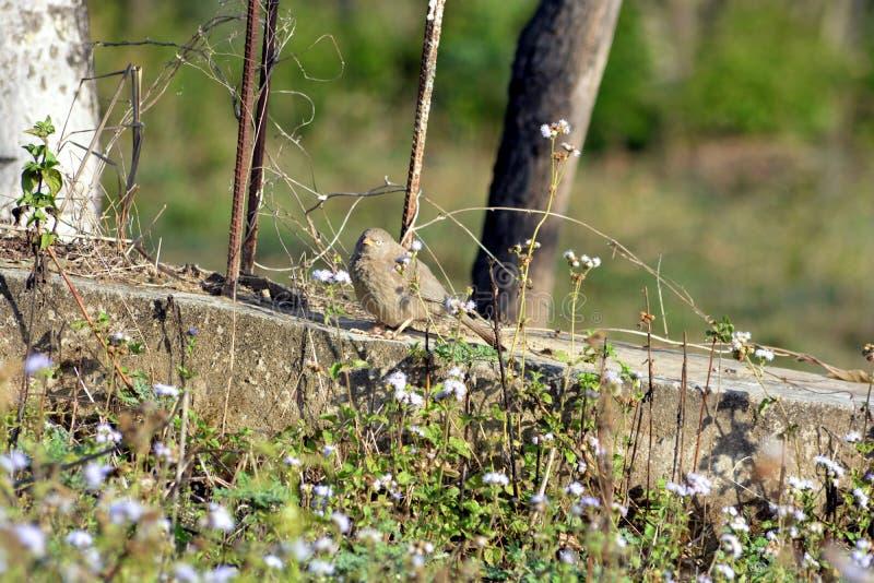 Os pássaros bonitos na terra fotos de stock royalty free