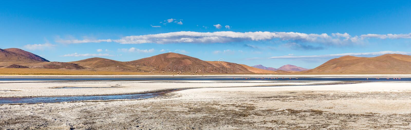 Os pássaros cor-de-rosa do flamingo reunem o lago de sal, Bolívia foto de stock