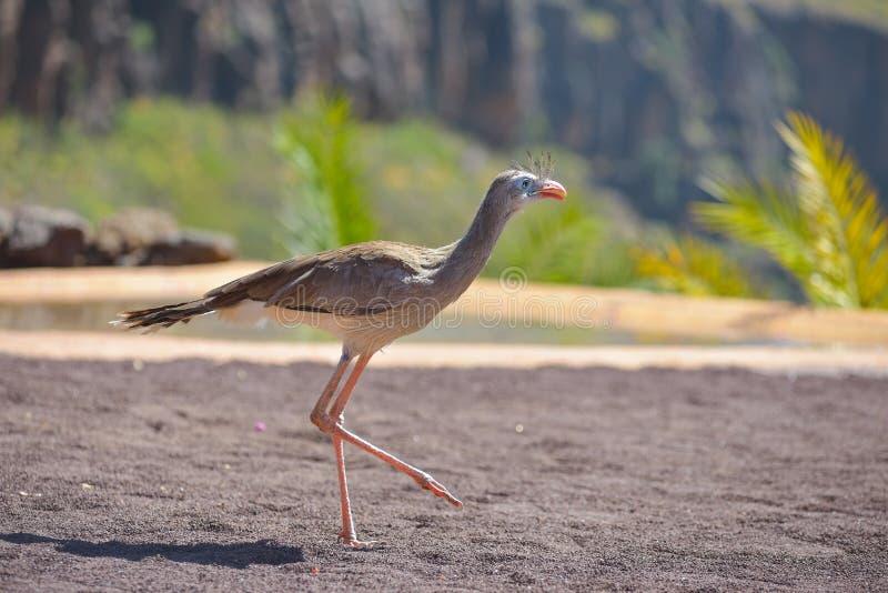 Os pássaros de rezam no parque Maspalomas de Palmitos, Gran Canaria, Espanha imagem de stock