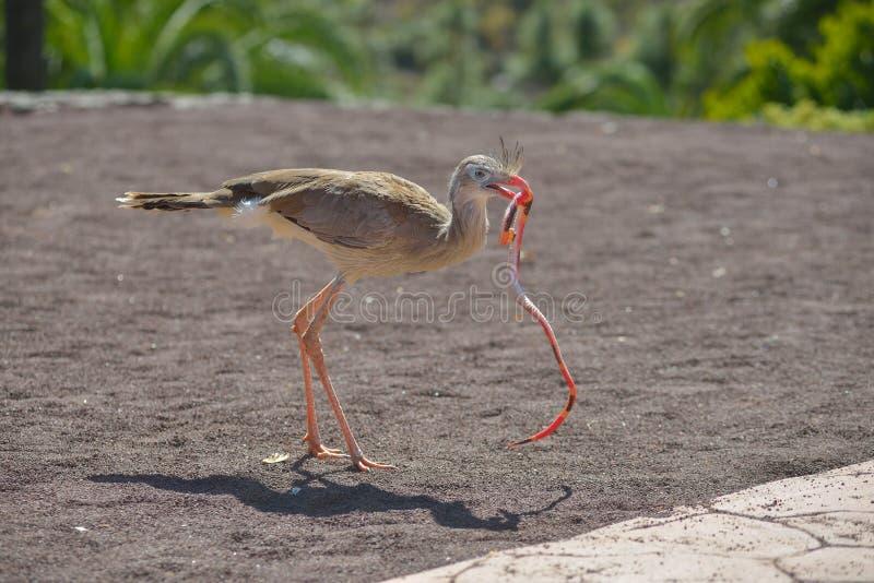 Os pássaros de rezam no parque Maspalomas de Palmitos, Gran Canaria, Espanha foto de stock royalty free