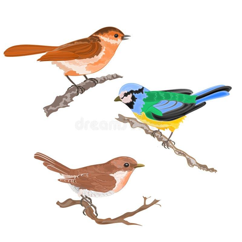Os pássaros do canto na tração da mão do vintage do pardal do titmouse da toutinegra dos ramos ajustaram uma ilustração dos anima ilustração stock