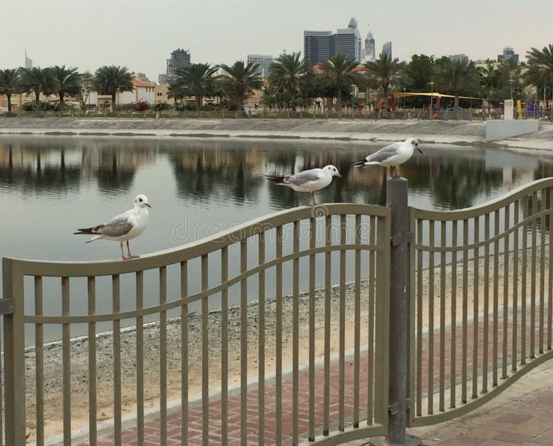 Os pássaros empoleiraram-se em uma cerca em um parque imagem de stock