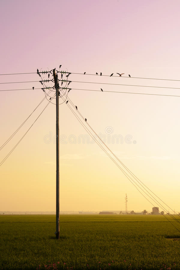 Os pássaros penduram em linhas elétricas da eletricidade fotografia de stock