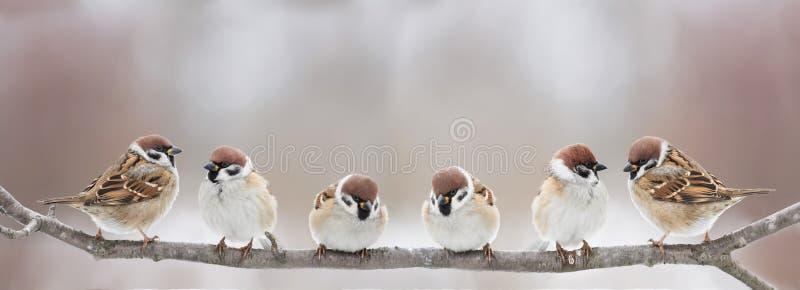 Os pássaros pequenos engraçados sentam-se em um ramo em uma mola Sunny Park e no chilro fotografia de stock royalty free