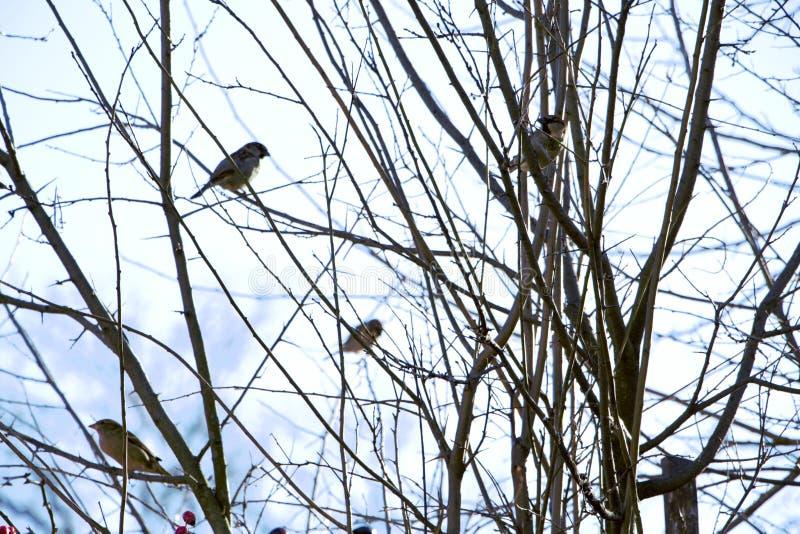 Os pássaros pequenos nos ramos do cão aumentaram fotos de stock