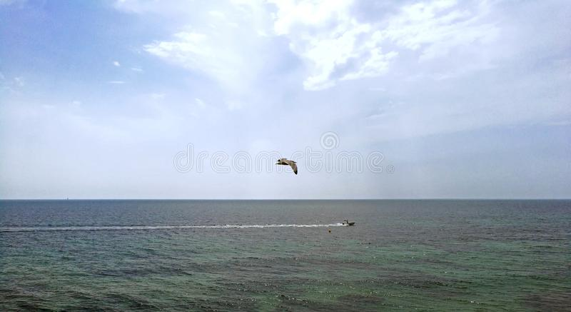 Os pássaros perseguem o barco de pesca comercial fora da costa da Espanha fotografia de stock