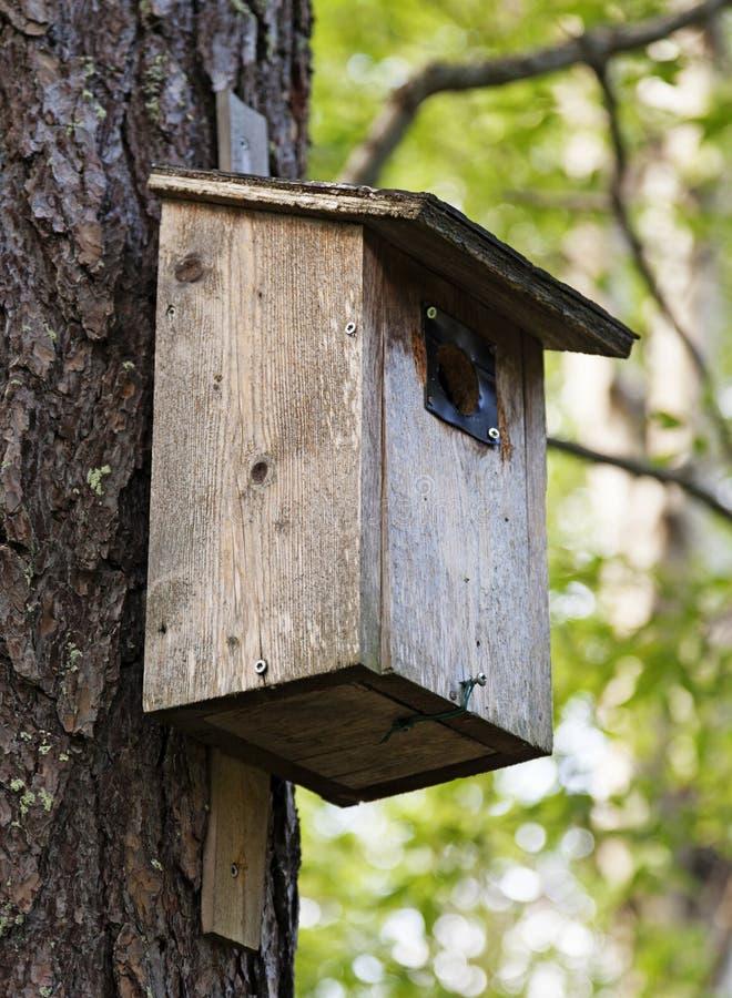 Os pássaros resistidos e usados aninham-se montado em uma árvore imagem de stock royalty free