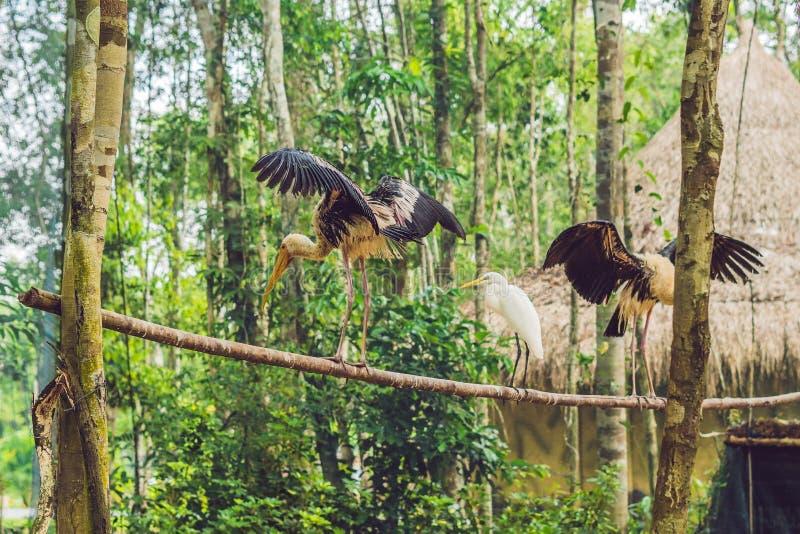 Os pássaros tropicais exóticos dos animais selvagens e da floresta úmida em um pássaro estacionam fotos de stock royalty free