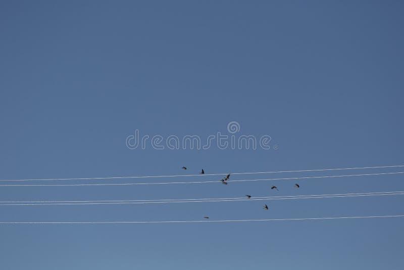 Os pássaros voam ao longo dos fios, como notas em uma pauta musical foto de stock royalty free