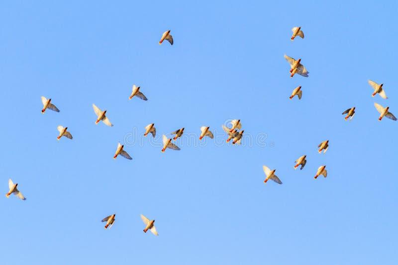 Os pássaros voam belamente no céu de nivelamento imagem de stock royalty free