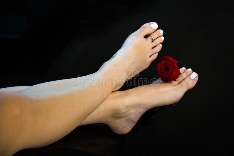 Os pés agradáveis da mulher cruzaram-se com a flor fresca da rosa do vermelho, polimento de pregos branco, pele lisa e saltos, pé foto de stock