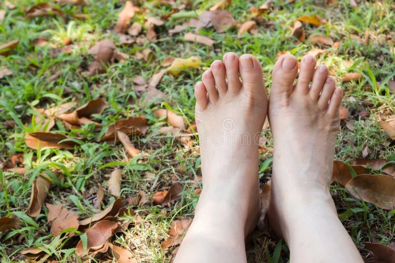 Os pés da mulher na grama imagem de stock