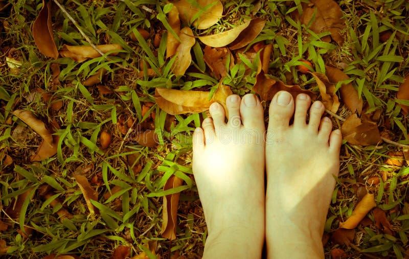Os pés da mulher na grama Estilo do vintage foto de stock
