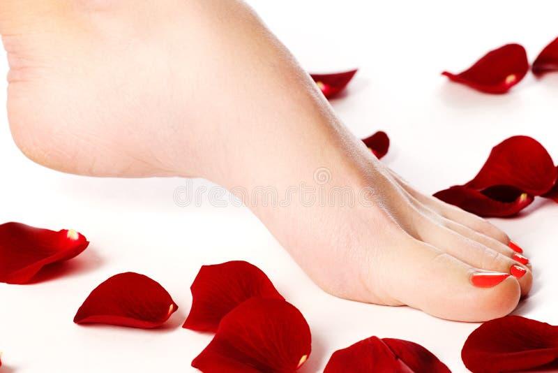 Os pés da mulher saudável Pés isolados no branco Mulher bonita le fotografia de stock