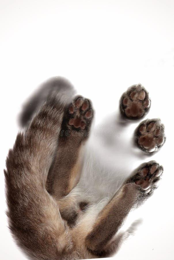 Os pés do gato fotografia de stock royalty free