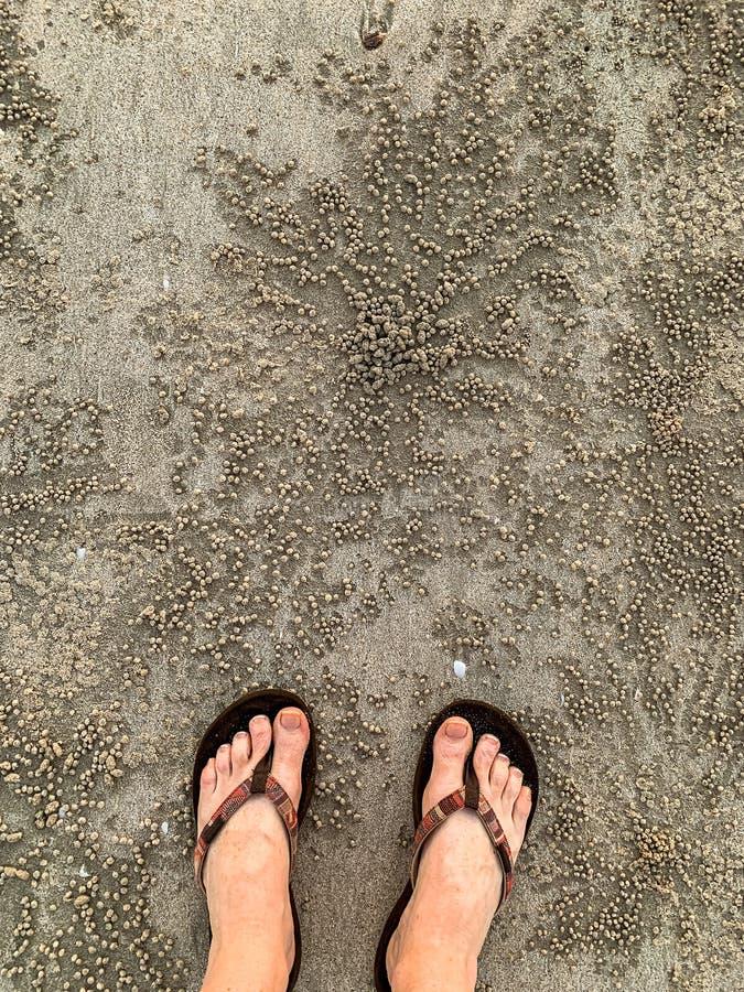 Os pés nas tangas lixam pelotas do caranguejo do bebedoiro automático fotos de stock royalty free