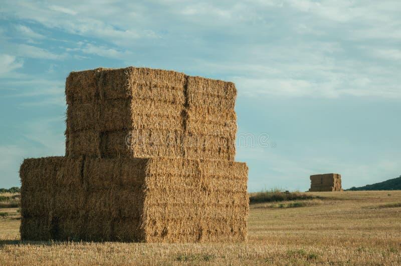 Os pacotes de feno empilharam acima no campo em uma exploração agrícola fotos de stock