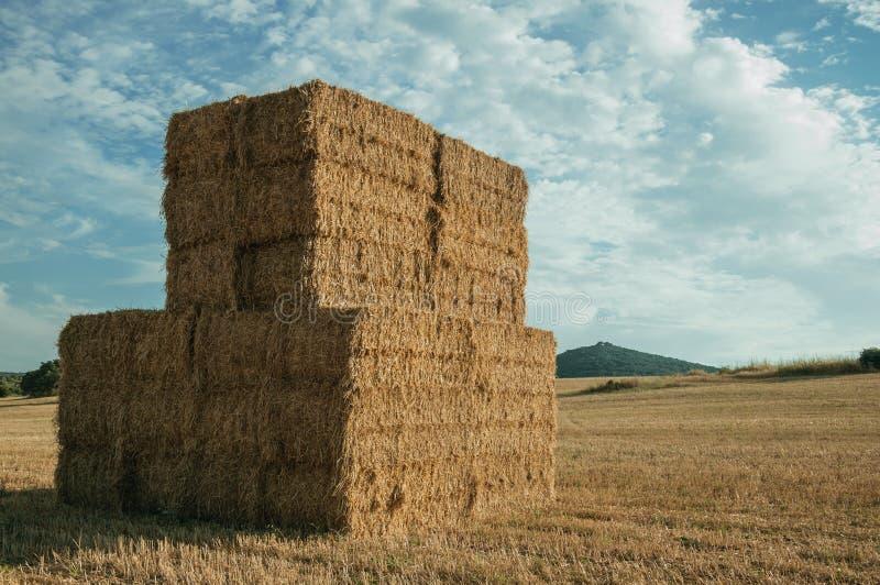 Os pacotes de feno empilharam acima no campo em uma exploração agrícola imagens de stock royalty free