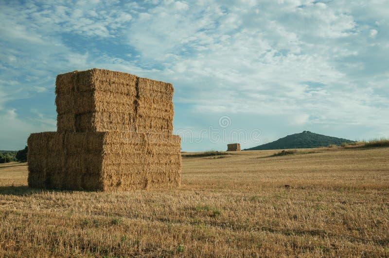 Os pacotes de feno empilharam acima no campo em uma exploração agrícola foto de stock