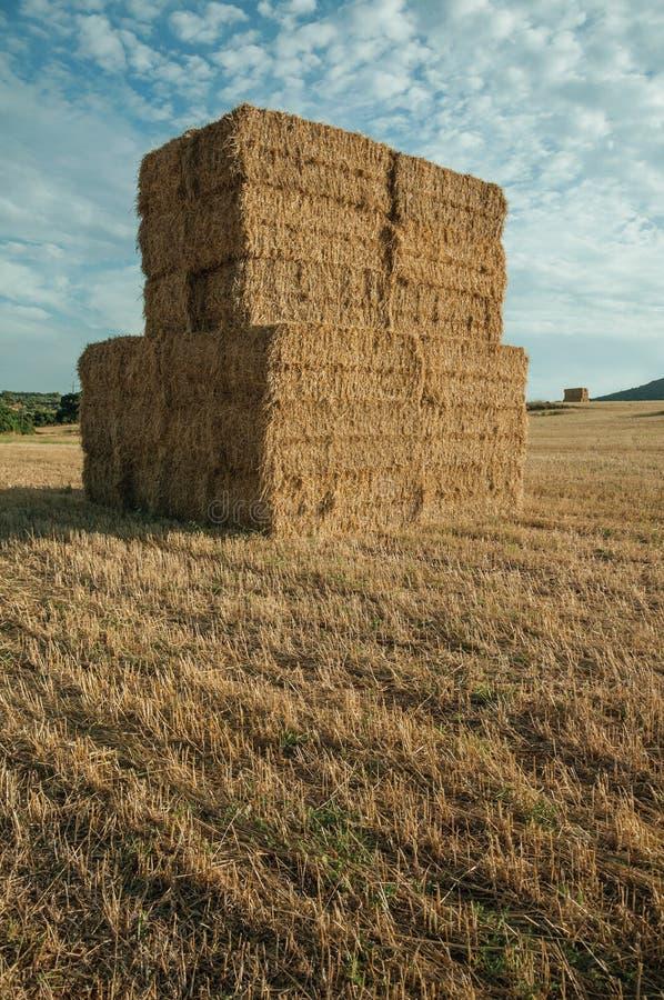 Os pacotes de feno empilharam acima no campo em uma exploração agrícola imagens de stock