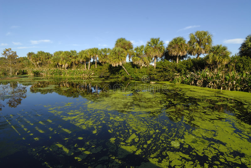 Os pantanais de Florida imagens de stock royalty free