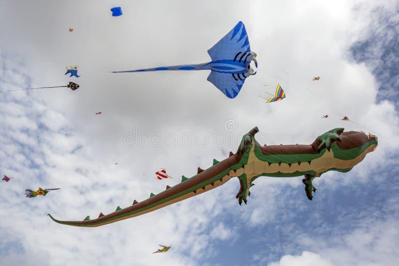 Os papagaios coloridos voam acima da praia de Negombo em Sri Lanka fotos de stock royalty free