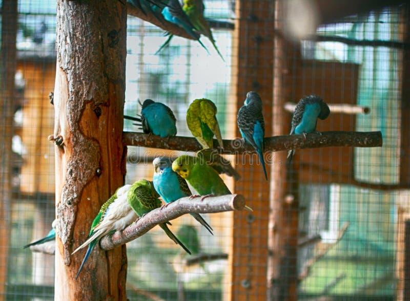 Os papagaios de cores diferentes sentam-se em ramos foto de stock