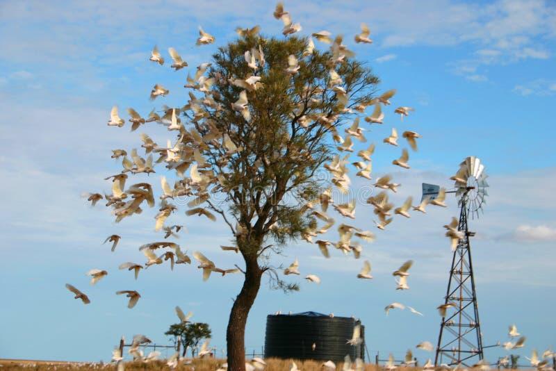 Os papagaios voam das árvores fotografia de stock