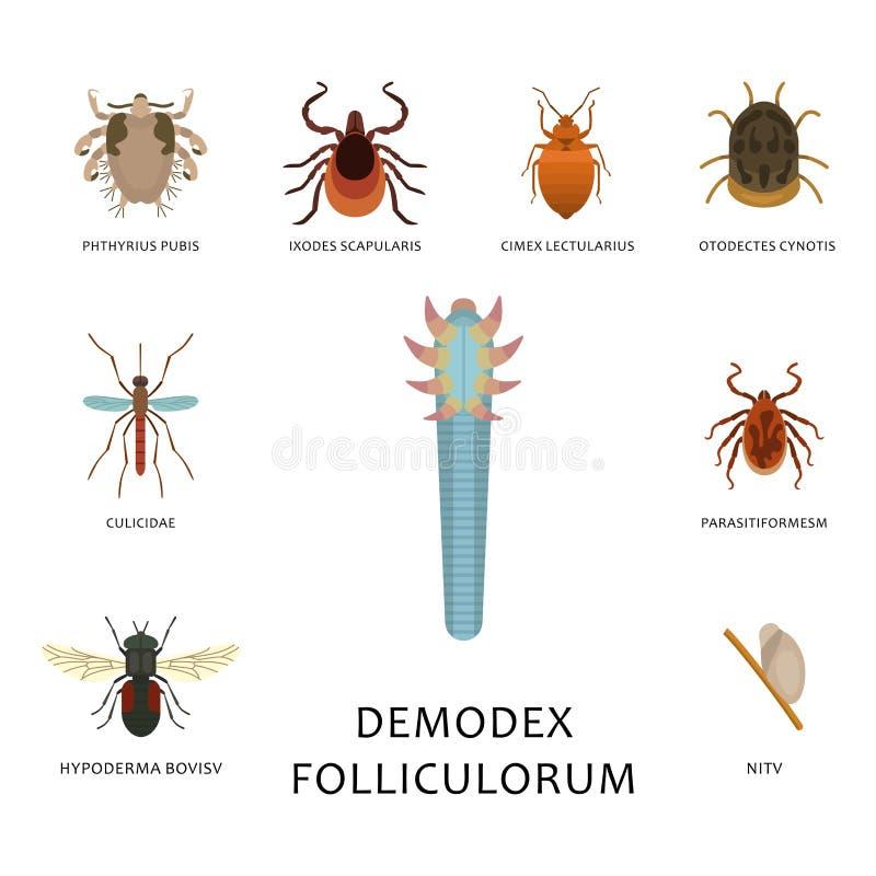 Os parasita humanos da pele vector a medicina perigosa macro da infecção da mordida animal do erro parasítico da doença dos inset ilustração do vetor