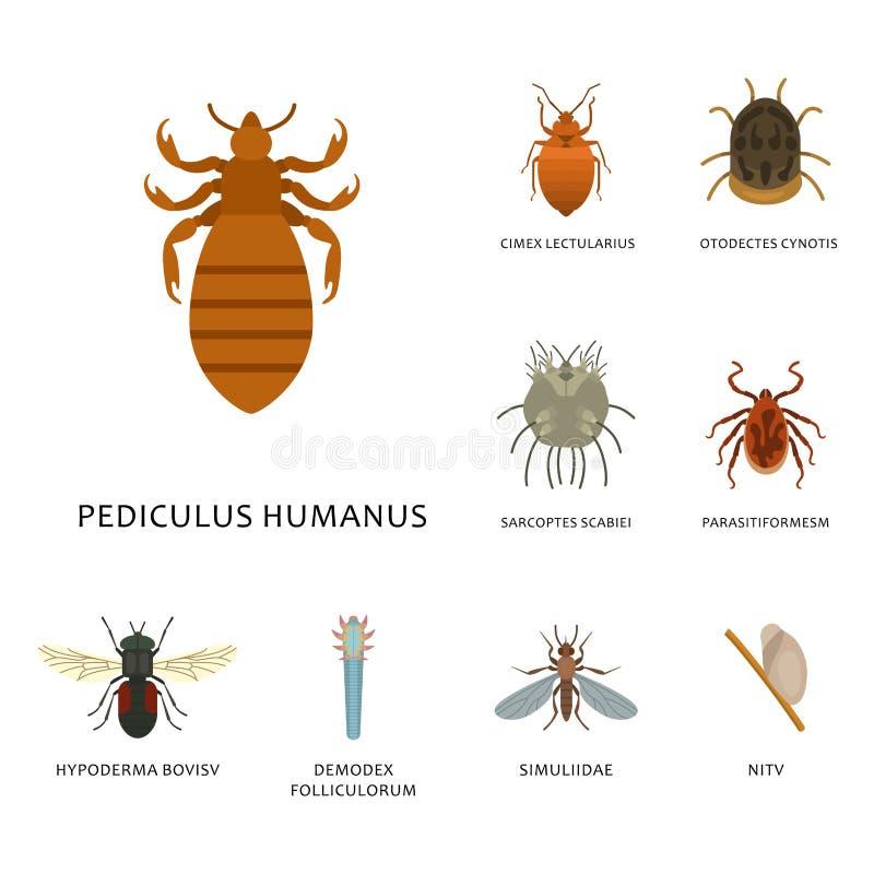 Os parasita humanos da pele vector a medicina perigosa macro da infecção da mordida animal do erro parasítico da doença dos inset ilustração royalty free