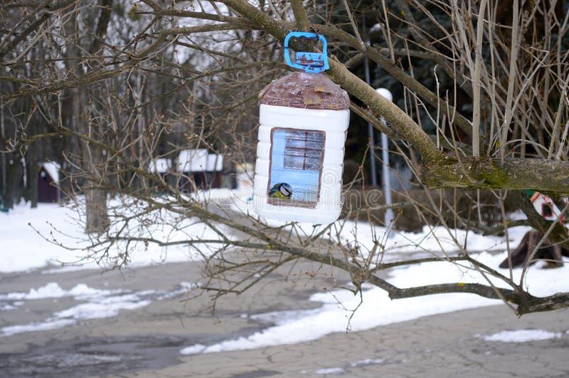 Os pardais no inverno comem dos alimentadores fotografia de stock royalty free